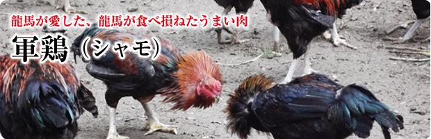 龍馬が愛した、龍馬が食べ損ねたうまい肉。軍鶏(シャモ)