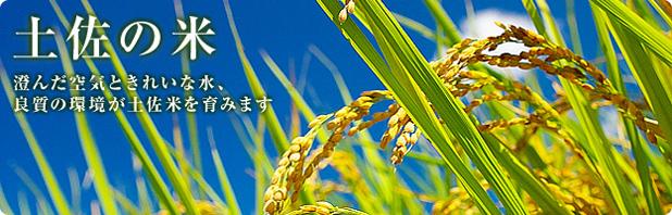 土佐の米。澄んだ空気ときれいな水、良質の環境が土佐米を育みます