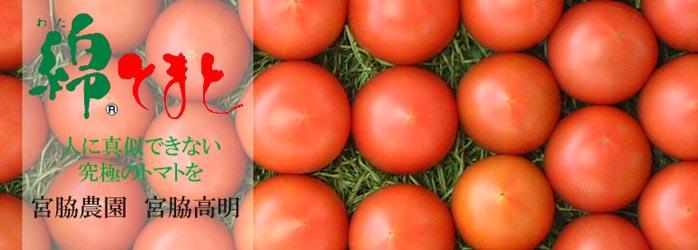 人に真似できない究極のトマトを/宮脇農園