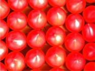 ルネッサンストマト