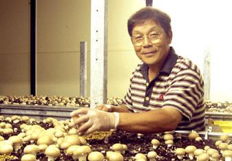 収穫作業中の竹内さん