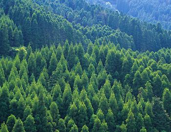 高知の森林