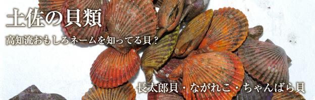 土佐の貝類