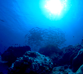 室戸海洋深層水イメージ