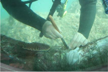 土佐の生産者紹介「宝石珊瑚グループ SeaProof(シープルーフ)」